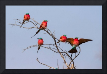 Pretty Red Birds