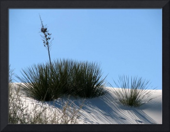 Yucca on the Dunes I