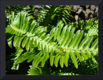Forest Ferns Art Prints Green Nature Fern