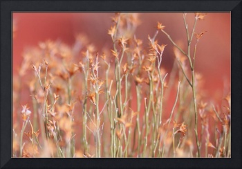 Pink Romantic Grass