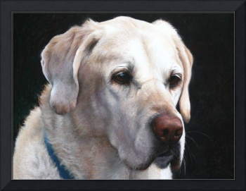 Portrait of A Yellow Lab