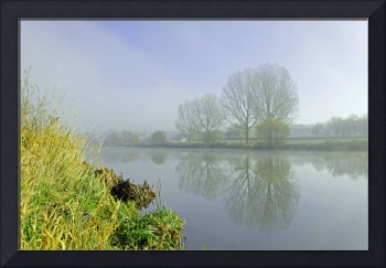 Misty trees at Waterside, Stapenhill (26995-RDA)
