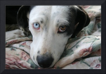dog with sad odd eyes