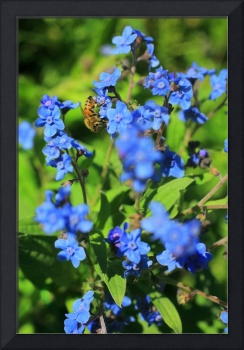 Bee Pollinating Forget-Me-Nots