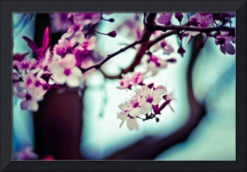 Blossoming Flowers On Tree