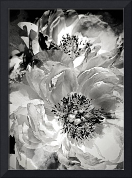 Irena Orlov Abstract Flower Photography