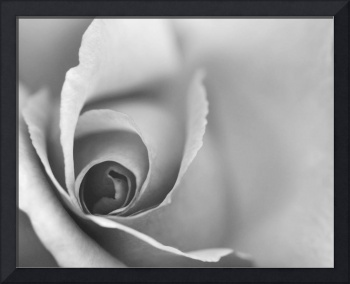 Romantic Black and White Floral Wall Art