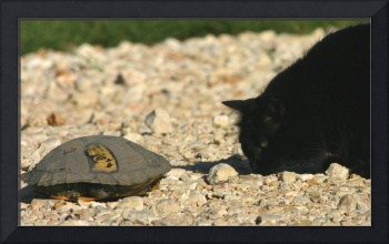 Cat and Turtle Meet and Greet