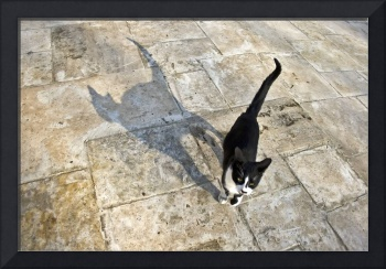 Cat with shadow walking towards camera