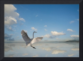Egret-Flight-V