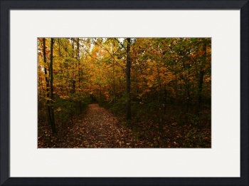 The Sacred Grove in the Fall by D. Brent Walton