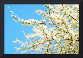 Spring Fine Art Photography