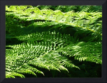 Green Forest Fern Branches Leaves Art Prints Ferns