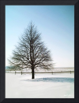 A Perfect Winter Tree
