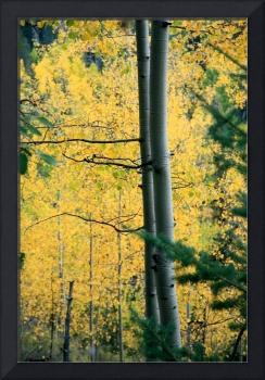 Autumn in the Forest 3