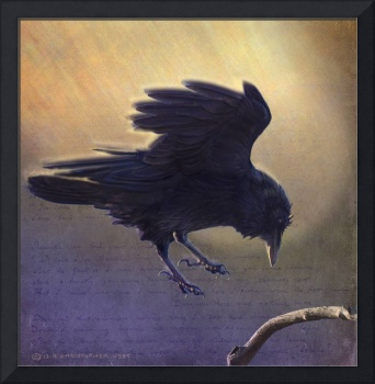 the comet corvidae - the hopping raven
