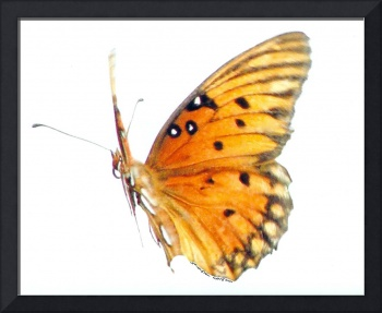 Butterfly in Flight Before a White Background