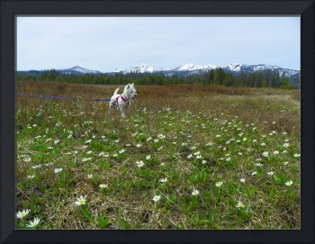 In The Mountains Surrounded By Daisies