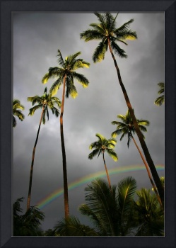 Kauai Palms with Rainbow