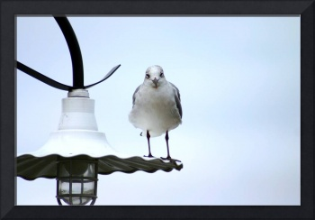 Seagull Light