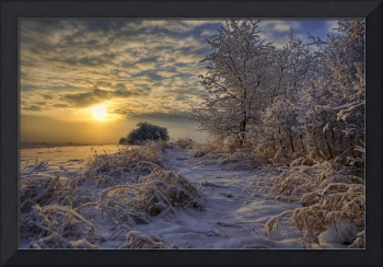 Hoar Frost Covered Trees At Sunrise In The Alberta