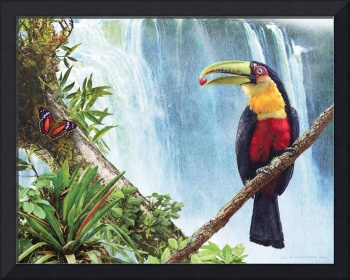 red breasted toucan by the falls
