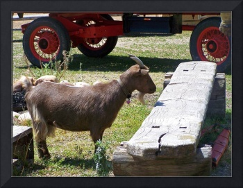 Goat And Antique Wheels