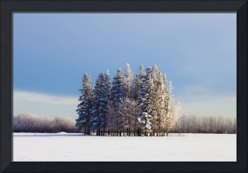 A Cluster Of Trees In A Field Covered In Snow, Par