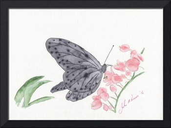 Orchids and Butterfly 1-1
