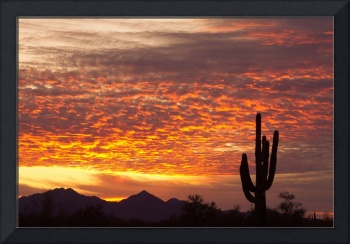 Arizona November Sunrise With Saguaro