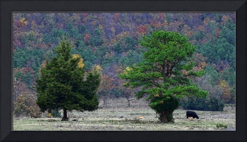 Two Trees and a Cow
