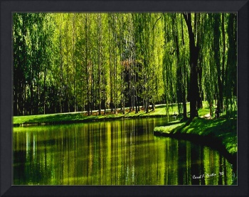 Weeping Willow Tree Ribbons