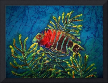 Ocean Dudes - Red Banded Wrasse