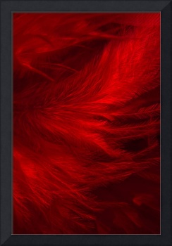 Red Feathers - 1