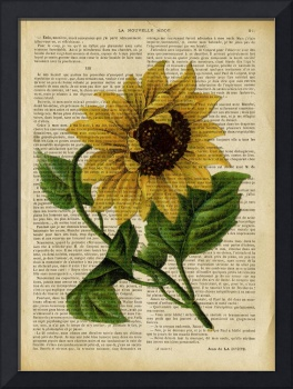 old book page botanical print - sunflower