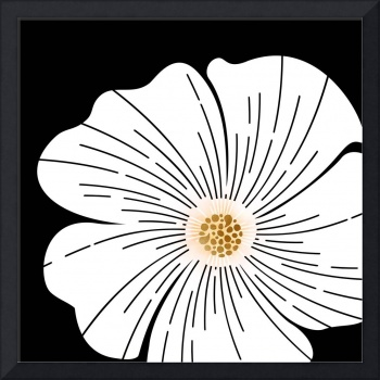 Black and White Wildflower