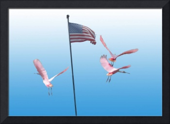 Flamingos & flag