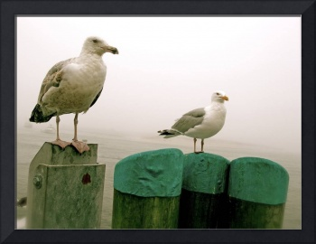 Seagulls at Chatham Harbor, Cape Cod.