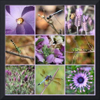 Purple Flowers and Dragonflies Collage