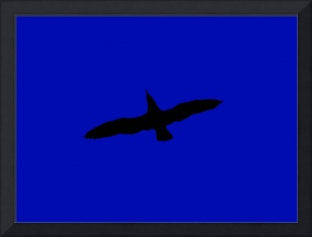 Flying Bird - Black & Blue