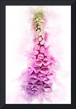 Digitalis Splash