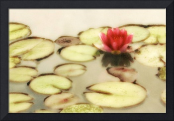 Water Lily Number 2