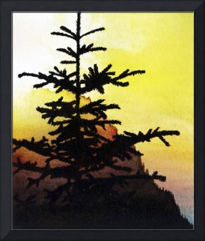 Sunset conifer