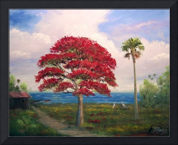 Royal Poinciana and Shack