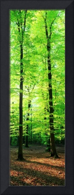 Forest Germany