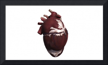 Three dimensional view of human heart, left side