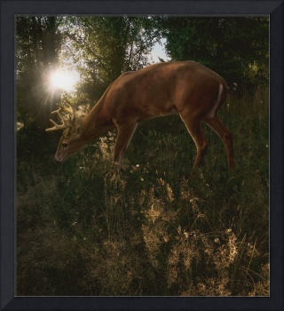 Deer Light