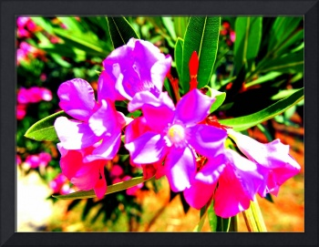 Abstract Flowers on Cyprus