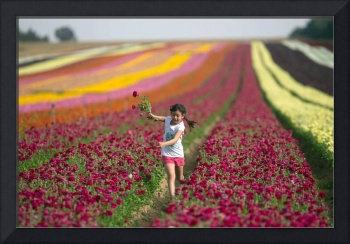 Young Girl Picks From A Field Ranunculus Flowers