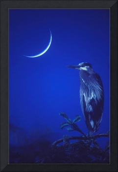 Heron and new moon